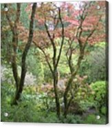 Beauty Among The Trees Acrylic Print