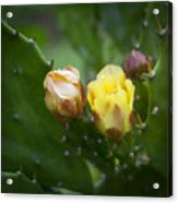 Beauty Among Thorns Acrylic Print
