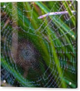 Beauty And Intricacy Acrylic Print