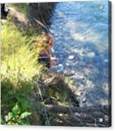 Beauty By The River Acrylic Print