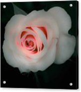 Beauty Comes From Within Acrylic Print