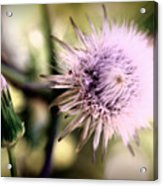 Beauty In Everything Acrylic Print