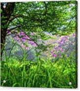 Beauty In The Fog Acrylic Print