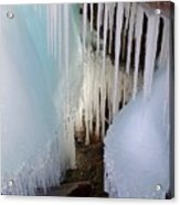 Beauty In The Ice Acrylic Print