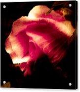 Beauty In The Shadows Acrylic Print