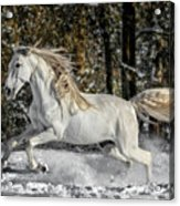 Beauty In The Snow Acrylic Print