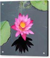 Beauty In Water Acrylic Print