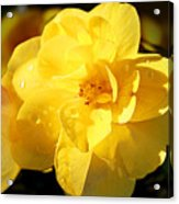 Beauty In Yellow Acrylic Print