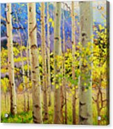 Beauty Of Aspen Colorado Acrylic Print