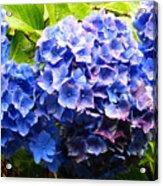 Beauty Of Blue. Acrylic Print