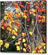 Beauty Of Fall Acrylic Print