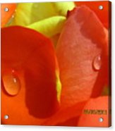 Beauty Of The Roses Acrylic Print