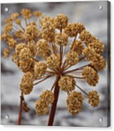 Beauty Of The Seeds Acrylic Print