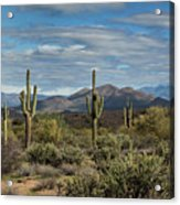 Beauty Of The Sonoran  Acrylic Print