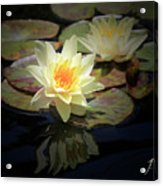 Beauty Of The Water Lily Acrylic Print