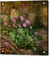 Beauty On An Old Stone Wall Acrylic Print