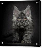 Beauty Or Beast Acrylic Print