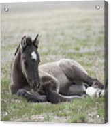 Beauty Rest Acrylic Print by Nicole Markmann Nelson