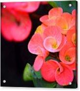 Beauty And Thorns Acrylic Print