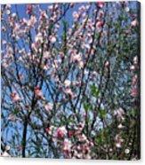 Beautiful Spring. Blooming Tree 2 Acrylic Print