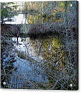 Beaver Dam Acrylic Print