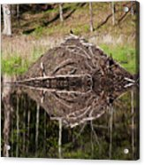 Beaver Lodge Reflection Acrylic Print