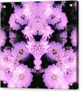 Bed Of Pink Dahlias Acrylic Print