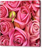 Bed Of Roses Acrylic Print by Carlos Caetano