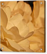 Bed Of Roses Acrylic Print