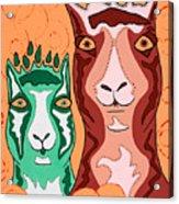 Bedazzled Llamas Acrylic Print