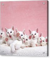 Bedtime Kittens I'm Not Tired Mom Acrylic Print