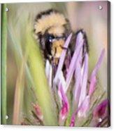 Bee 3 Acrylic Print