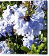 Bee And Flowers IIi Acrylic Print