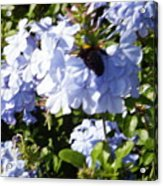 Bee And Flowers Iv Acrylic Print