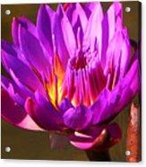 Bee Attractor Acrylic Print