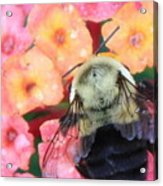 Bee Card Acrylic Print