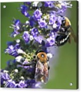 Bee Cause Acrylic Print