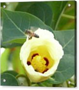 Bee Chowtime Acrylic Print