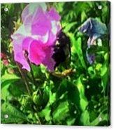 Bee Climbing Into Flower Acrylic Print