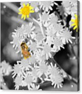 Bee Colored Acrylic Print