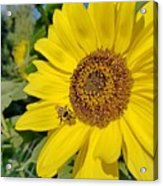 Bee-dazzled Acrylic Print