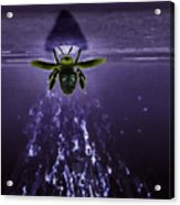 Bee Drilling Wood Acrylic Print