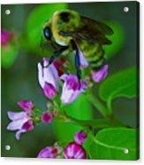 Bee Good 2 Acrylic Print