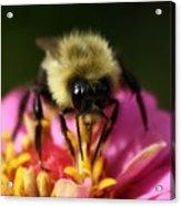 Bee Good Acrylic Print