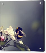 Bee Happy Acrylic Print by Gabriel Calahorra