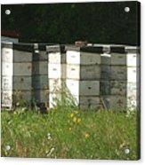 Bee Hives In A Farmer's Field Acrylic Print