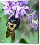 Bee-lieve Acrylic Print