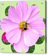 Bee-line 1 Acrylic Print
