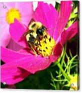 Bee-line 3 Acrylic Print