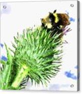 Bee-line 4 Acrylic Print